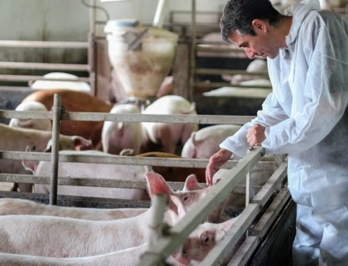 Court Agrees That Workers' Challenge to USDA's Disregard for Their Safety in New Swine Inspection System Can Move Forward